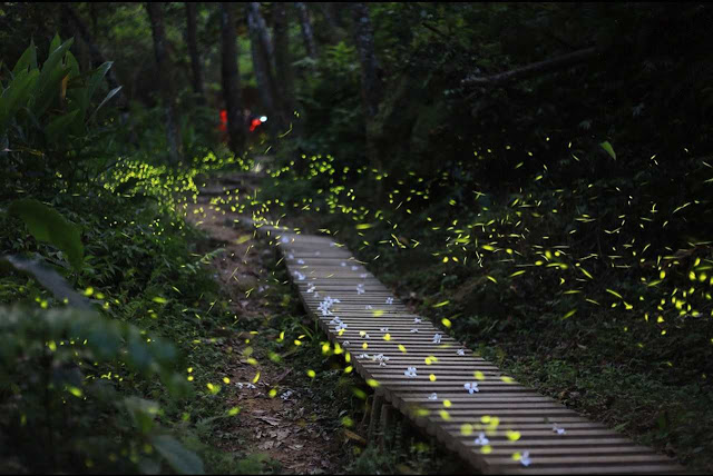 Risultati immagini per sentiero di lucciole